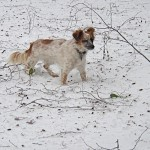 Cupcake in the snow