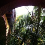 Foliage in the courtyard at the Instituto Cultural Oaxaca in the rain