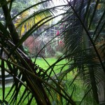 View through the foliage at the Instituto Cultural Oaxaca in the rain